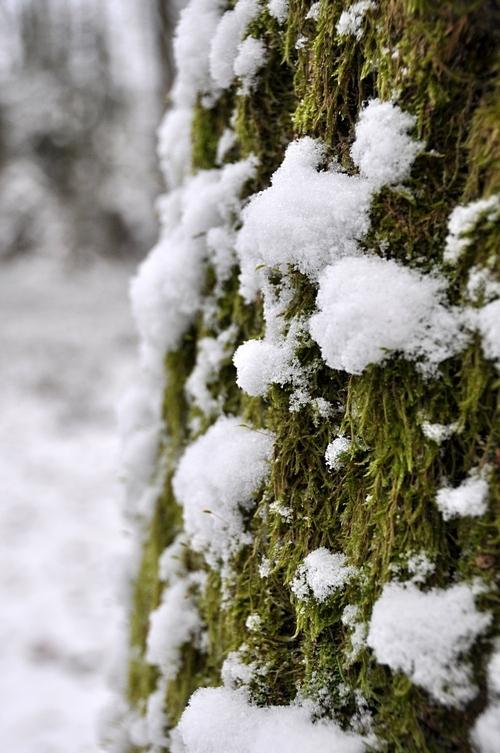 pirmas sniegas